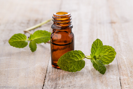 peppermint: fresh mint and mint oil on the wooden board Stock Photo