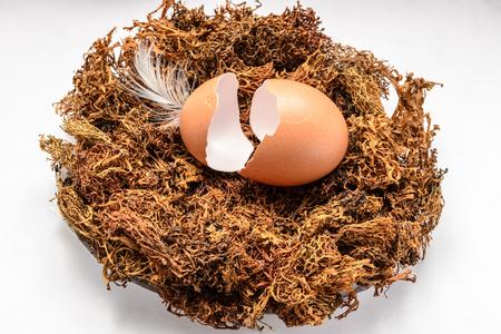 eggshell: eggshell in the nest