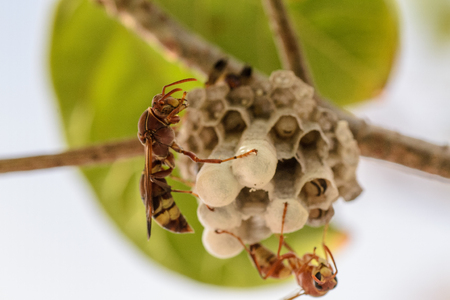 wasp and their building photo