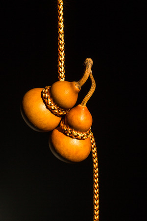 gourds: two bottle gourds with golden rope together