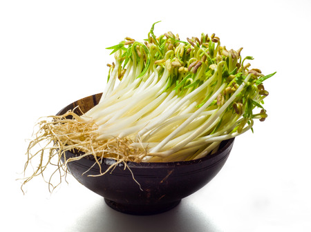beansprouts: green mung beansprouts in the wood bowl