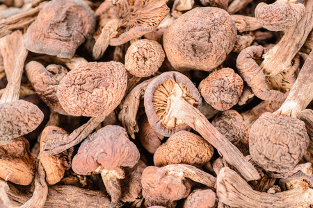 dried hazel mushroom, a kind of wild mushrooms in china. Stock Photo