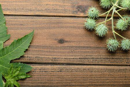 castor leaves and fruit