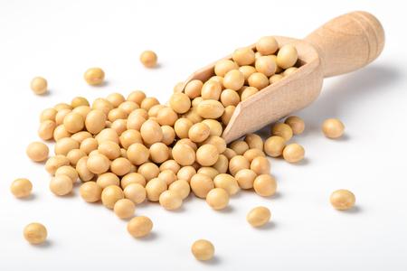 soybean: soybean