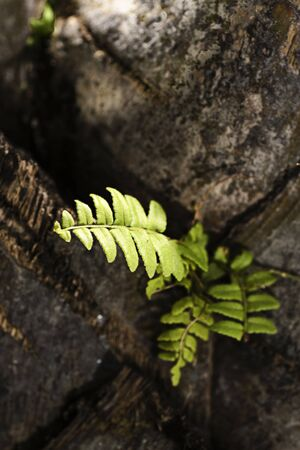 germinate: green plant grow in the cracks, vitality of plant, hope