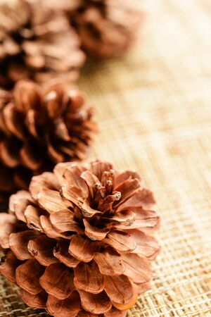 Pine cone: c�ne de pin sur le tapis de toile de jute