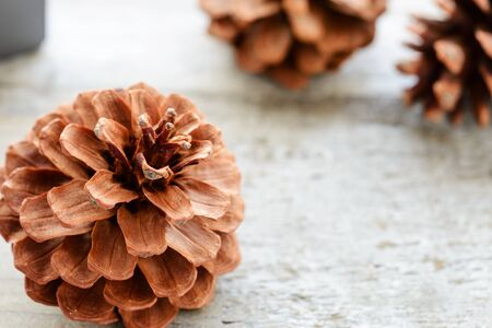 pomme de pin: pine cone on the wooden board