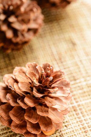 pomme de pin: pine cone on the burlap mat Banque d'images