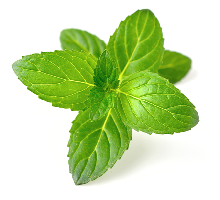 Peppermint leaves isolated on white