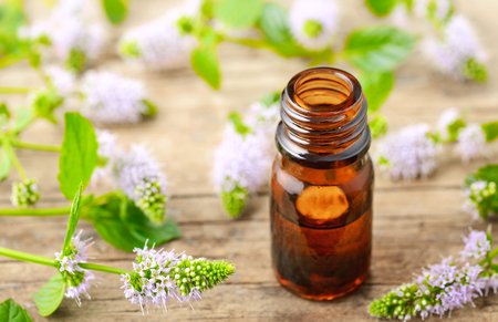 fresh purple Peppermint flowers and Peppermint essential oil on the wooden table