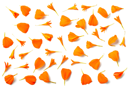 fresh orange marigold petals isolated on white