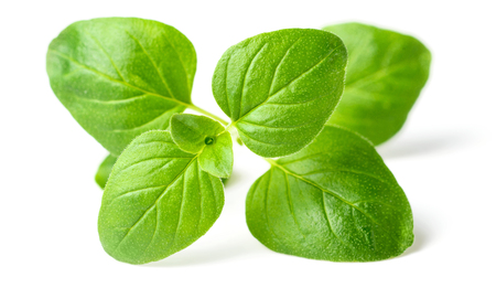 fresh oregano leaves isolated on white