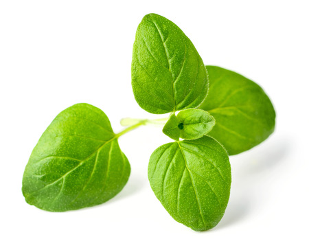 fresh oregano leaves isolated on white Stok Fotoğraf - 95358656