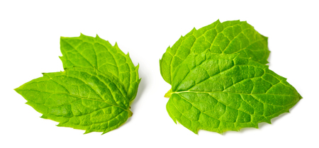 fresh spearmint leaves isolated on white background