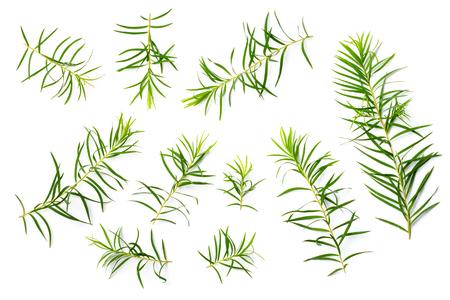 fresh tree leaves isolated on white background Stock Photo