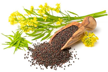 koolzaad en verse koolzaad bloemen op wit wordt geïsoleerd Stockfoto