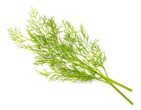 closeup of fresh dill weed isolated on white