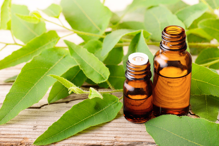Eucalyptus essential oil in the bottle, with fresh eucalytus leaves