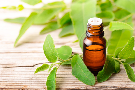 Eucalyptus essential oil in the bottle, with fresh eucalytus leaves