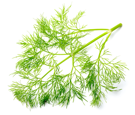 fresh dill weed isolated on white 免版税图像