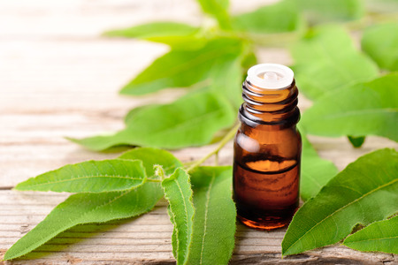 eucalyptus essential oil and fresh eucalyptus on the wooden board