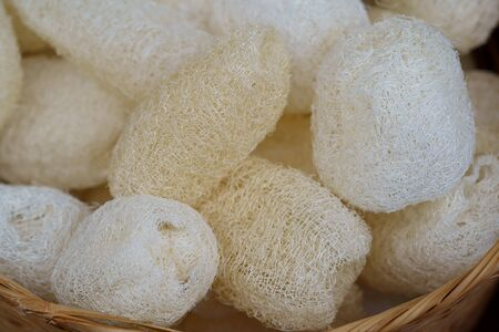 Natural sponge vegetable Thai Luffa Scrub for body scrubbing