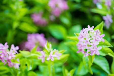 Purple flowers and leaf Summer background close up