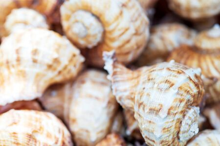 group of Sea Shell background Texture close up