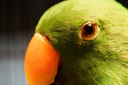 Portrait of Beautiful parrot standing closed up face