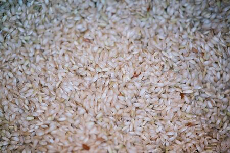 Close up of Paddy rice Texture Background Stock fotó
