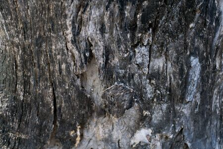 Close up dark old tree wood Texture background