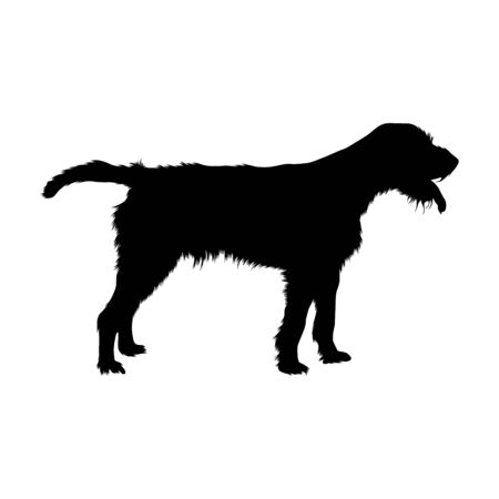 Cesky Fousek Silhouette, Gun Dog Group, Origin Czech Republic