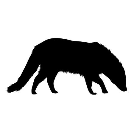 Standing African Civet Silhouette Isolated On White