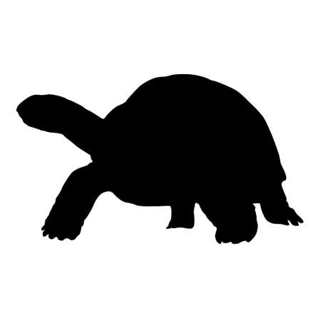 Aldabra Giant Tortoises Silhouette Side View Preview Isolated On White Background 일러스트
