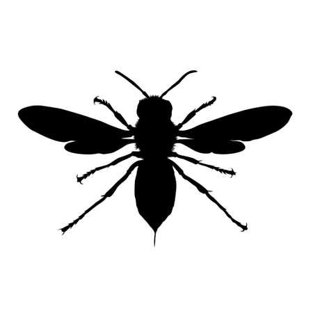 Full Body On Front View Asian Giant Hornet Silhouette