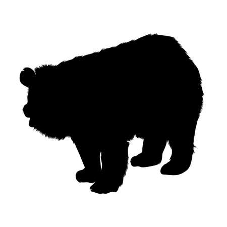 Standing On a Front Asiatic Black Bear Silhouette