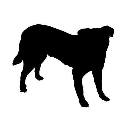 Standing Appenzeller Dog Silouette Vector Style Isolated On White