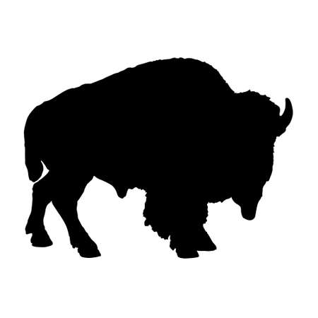 Standing On a Side View American Bison, Bison Bison, Silhouette, Africa, Asia And North America