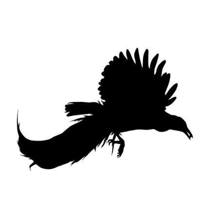 Flying Bird Of Paradise, Paradisaeidae, Silhouette, South East Asia, Indonesia, Papua New Guinea, Eastern Australia Vector Illustration