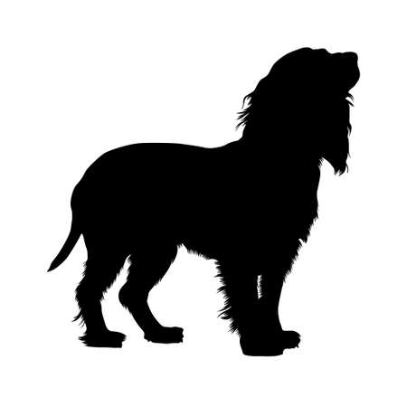 Boykin Spaniiel Dog, Silhouette, North America, Isolated On White Background, Vector Style