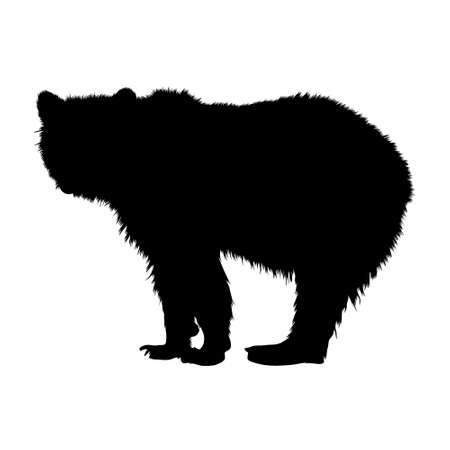 Dangerous American Bear (Ursus Arctos) Standing On a White