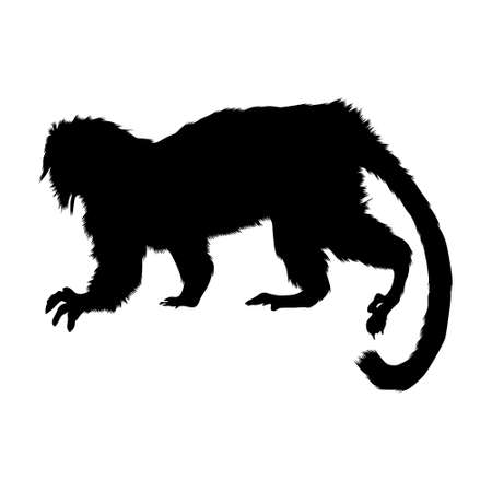 Cottontop Tamarin (Saguinus Oedipus) Silhouette Vector Found In Map Of South America
