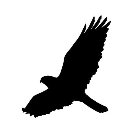 Flying Common Buzzard (Buteo Buteo) Silhouette Found In Europe, Russia, Asia And Northern Africa