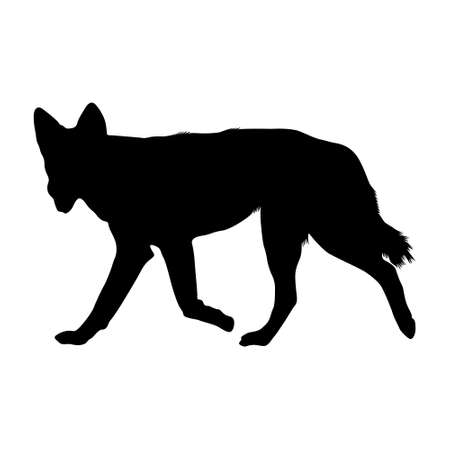 Dingo Dog (Canis Lupus Dingo) Silhouette Vector Found In South And East Asia