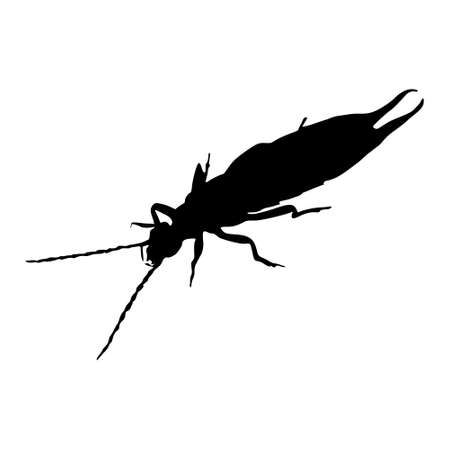 Earwig (Dermaptera) Silhouette Vector Found In Around Of The World