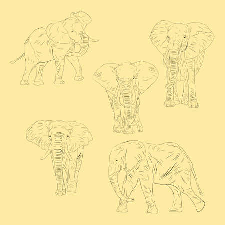 Simple Animal African Bush Elephant. Hand Drawn Sketch Set  イラスト・ベクター素材