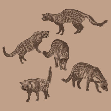 Animal Wildlife African Civet Overlapping Vector Style Set