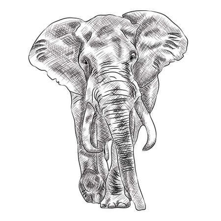 African Bush Elephant Digital Sketch Isolated On White  イラスト・ベクター素材