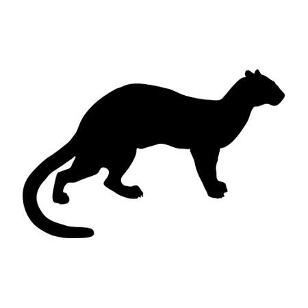 Fossa (Cryptoprocta ferox) Silhouette Found In Map Of Africa