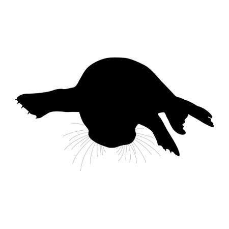Grey Seal (Halichoerus Grypus),  Resting On a Beach, Front View, Silhouette, Found In Map Of United Kingdom, Ireland, the Faroe Islands, Norway, Iceland and in northwestern Russia